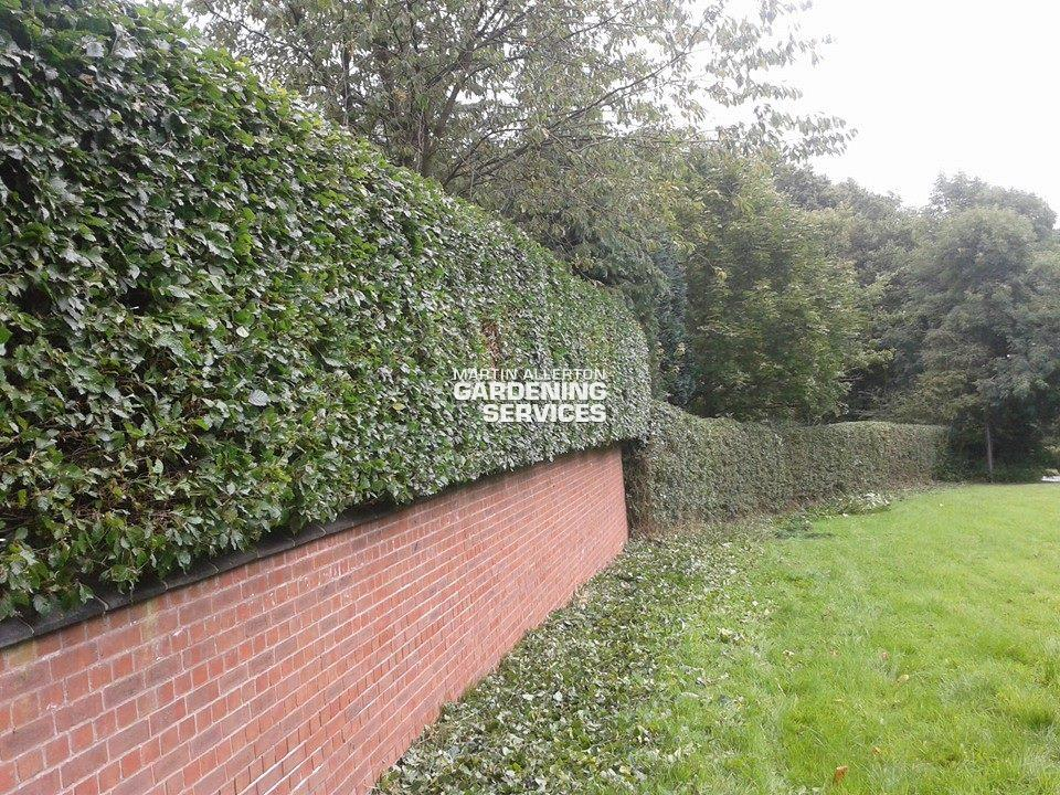 Bury Bank hedge cutting - after