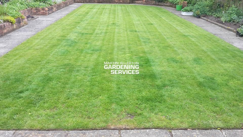 Standon lawn scarifying - two months after